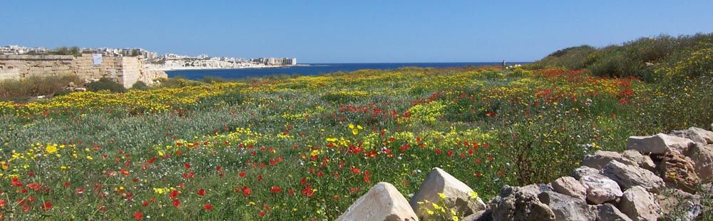 Viaggio a Malta 2014